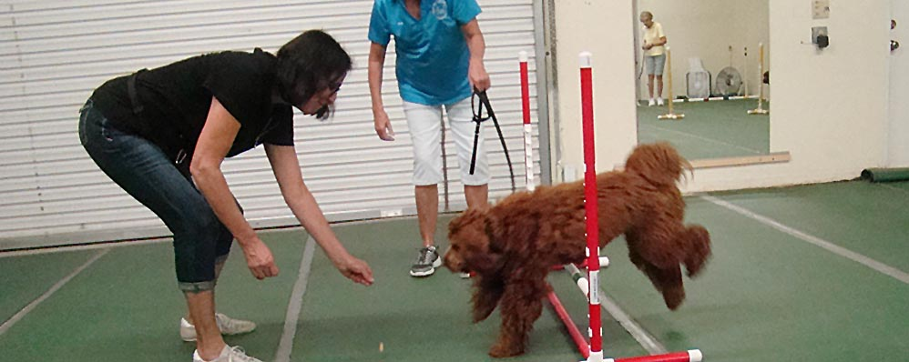 Greater Venice Dog Club - Home